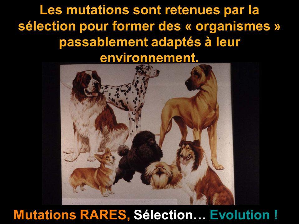 Les mutations sont retenues par la sélection pour former des « organismes » passablement adaptés à leur environnement. Mutations RARES, Sélection… Evo