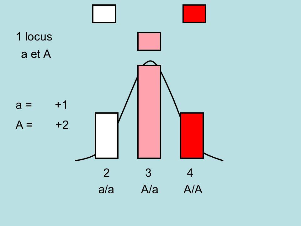 1 locus a et A a = +1 A = +2 A/AA/aa/a 234