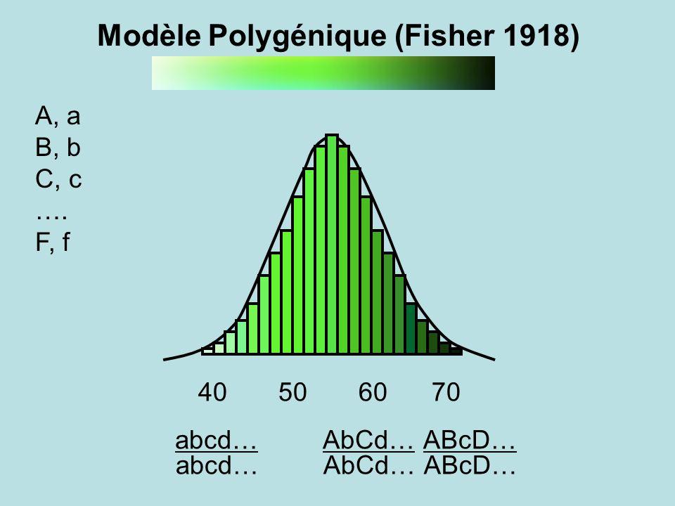 ABcD…abcd…AbCd… A, a B, b C, c …. F, f 40 50 60 70 ABcD…abcd…AbCd… Modèle Polygénique (Fisher 1918)