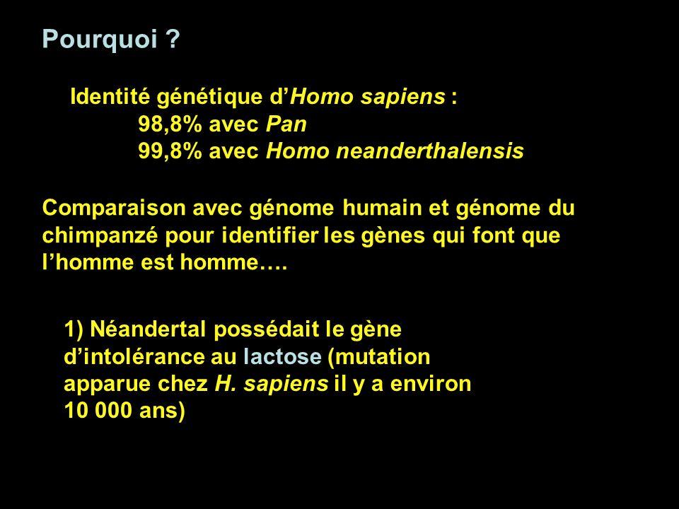 Pourquoi ? Comparaison avec génome humain et génome du chimpanzé pour identifier les gènes qui font que lhomme est homme…. 1) Néandertal possédait le