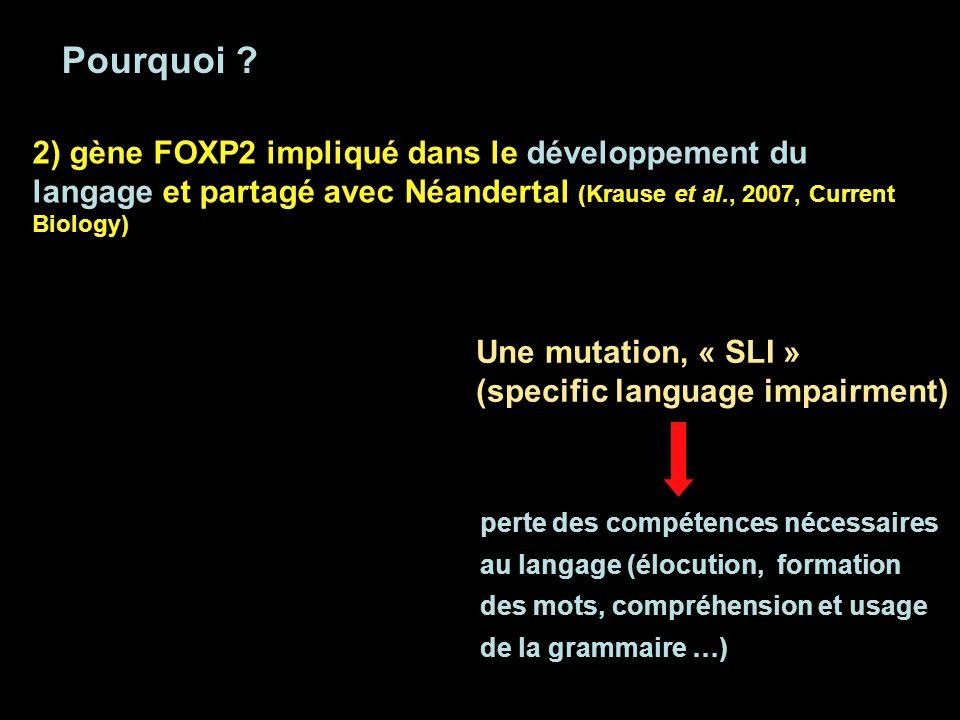 Pourquoi ? 2) gène FOXP2 impliqué dans le développement du langage et partagé avec Néandertal (Krause et al., 2007, Current Biology) Une mutation, « S