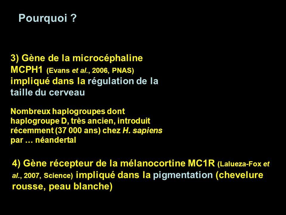 Pourquoi ? 4) Gène récepteur de la mélanocortine MC1R (Lalueza-Fox et al., 2007, Science) impliqué dans la pigmentation (chevelure rousse, peau blanch