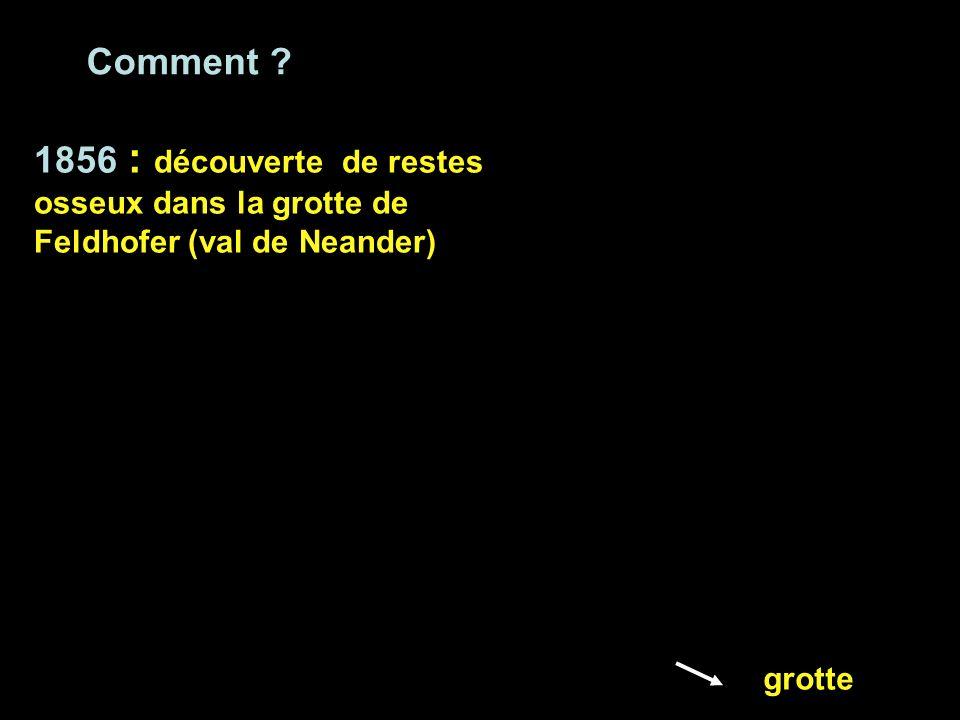 1856 : découverte de restes osseux dans la grotte de Feldhofer (val de Neander) grotte Comment ?