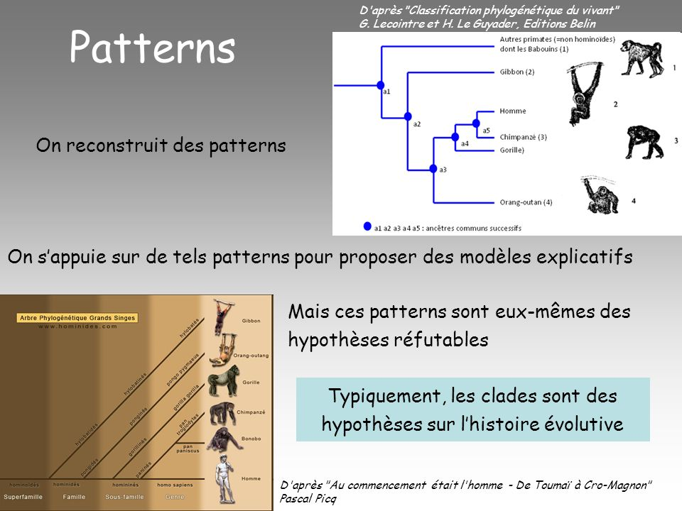 Patterns D après Au commencement était l homme - De Toumaï à Cro-Magnon Pascal Picq Mais ces patterns sont eux-mêmes des hypothèses réfutables On reconstruit des patterns On sappuie sur de tels patterns pour proposer des modèles explicatifs D après Classification phylogénétique du vivant G.