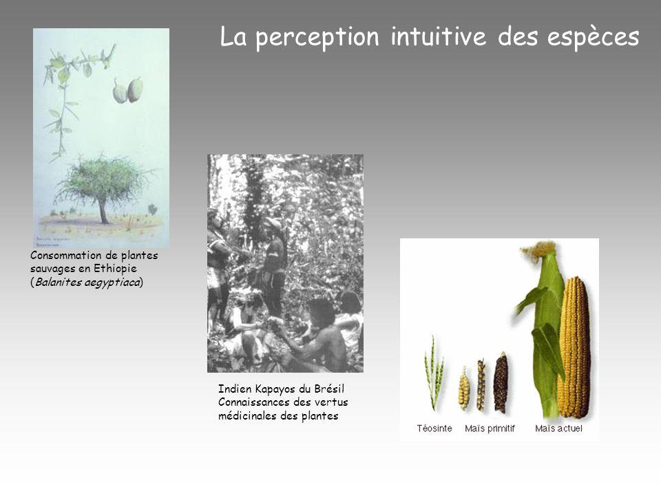 Consommation de plantes sauvages en Ethiopie (Balanites aegyptiaca) La perception intuitive des espèces Indien Kapayos du Brésil Connaissances des vertus médicinales des plantes