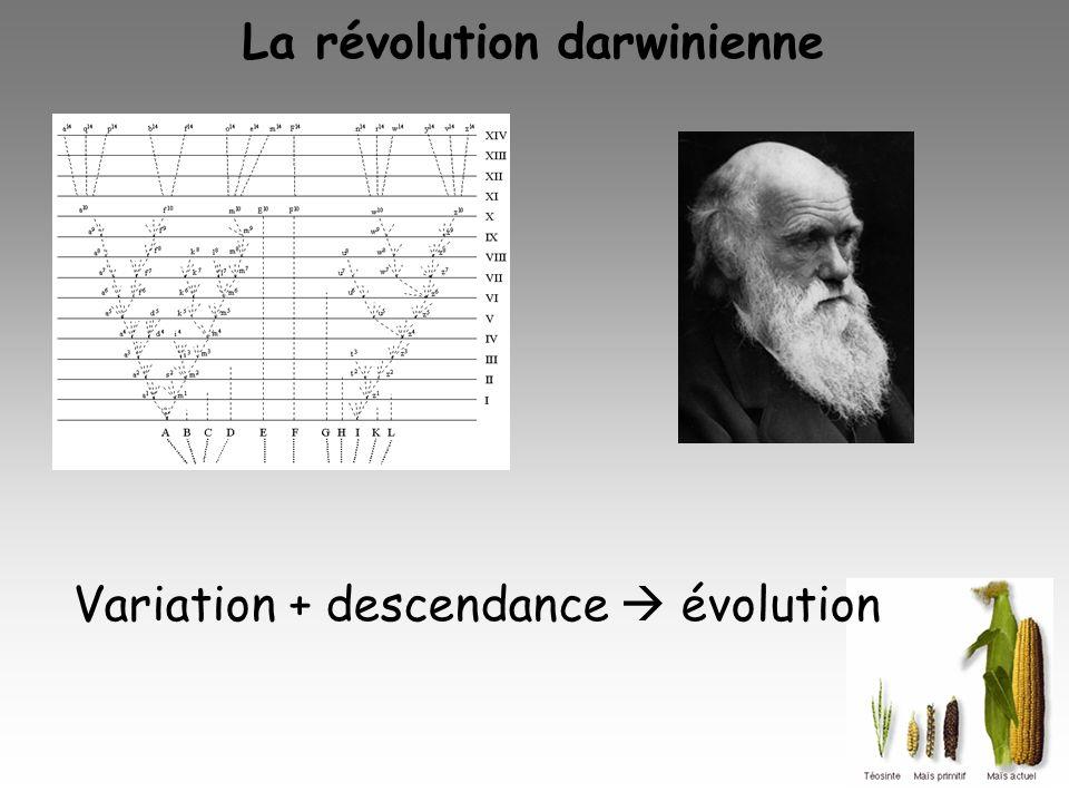 La révolution darwinienne Variation + descendance évolution