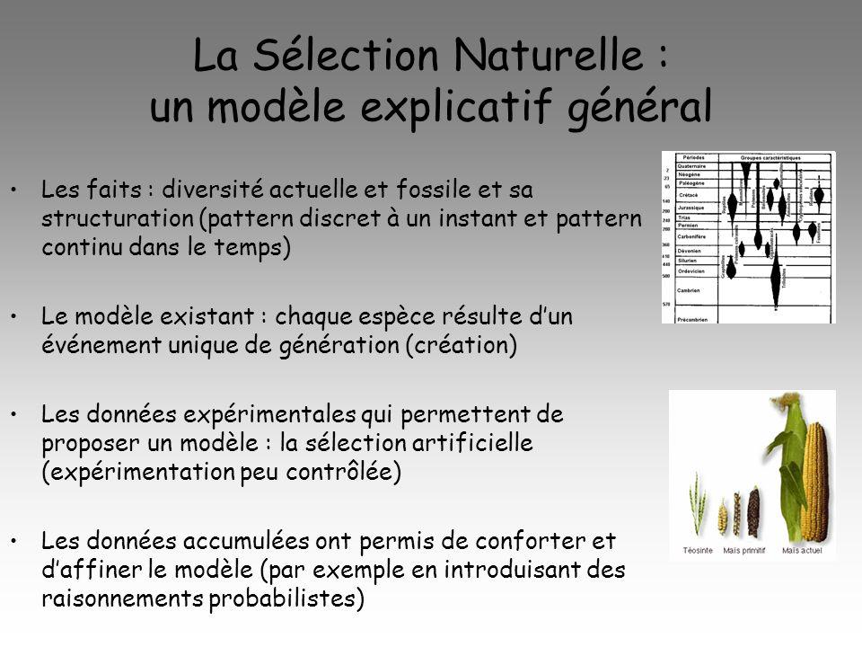 La Sélection Naturelle : un modèle explicatif général Les faits : diversité actuelle et fossile et sa structuration (pattern discret à un instant et pattern continu dans le temps) Le modèle existant : chaque espèce résulte dun événement unique de génération (création) Les données expérimentales qui permettent de proposer un modèle : la sélection artificielle (expérimentation peu contrôlée) Les données accumulées ont permis de conforter et daffiner le modèle (par exemple en introduisant des raisonnements probabilistes)