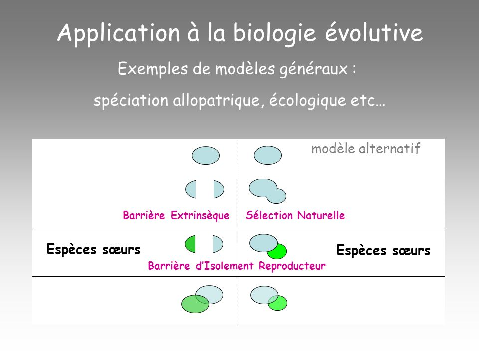 Pattern (phylogénie, données fossiles, structure génétique) = ensemble dhypothèses descriptives des faits à expliquer À partir de ce pattern, proposition dun modèle particulier qui peut être une combinaison des modèles généraux Application à la biologie évolutive Espèces soeurs espèce Y outgroup espèce Z espèce X AllopatrieSympatrie