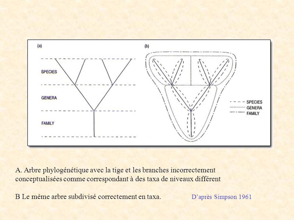 Simpson figure A. Arbre phylogénétique avec la tige et les branches incorrectement conceptualisées comme correspondant à des taxa de niveaux différent