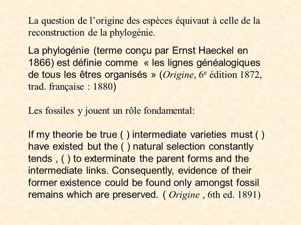 Origine et phylogénie La question de lorigine des espèces équivaut à celle de la reconstruction de la phylogénie. La phylogénie (terme conçu par Ernst