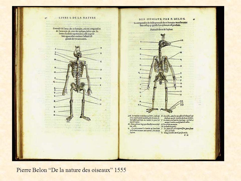 Homologie Belon 1555 Pierre Belon De la nature des oiseaux 1555
