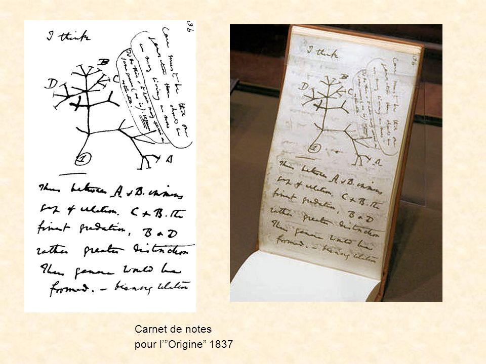 Le premier schéma Carnet de notes pour lOrigine 1837