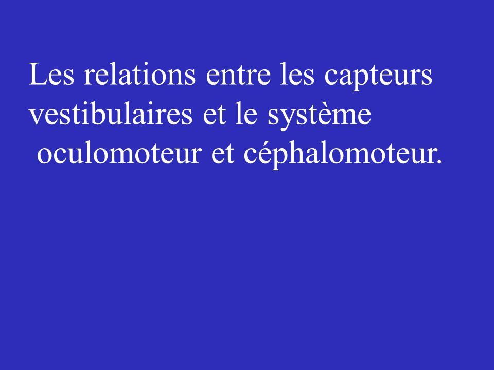 Les relations entre les capteurs vestibulaires et le système oculomoteur et céphalomoteur.