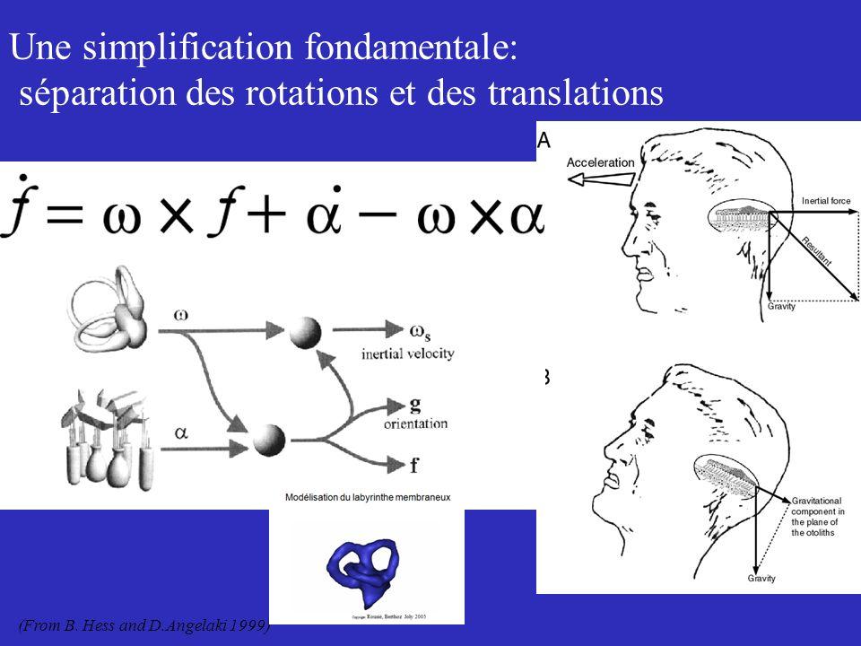 Saccule et utricule Jaeger-Haslwanter 2002,2004 Wilson, Melville Jones, Curthoys,… Moravec, Xue, Peterson, 2006