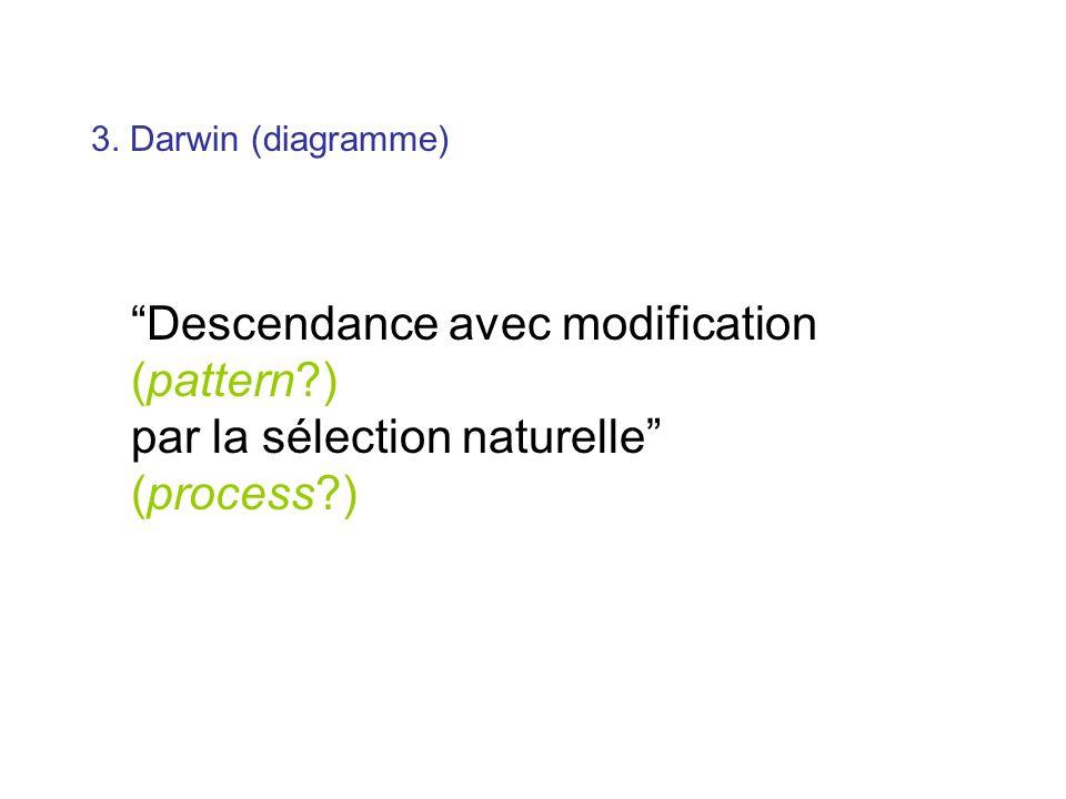 3. Darwin (diagramme) Descendance avec modification (pattern?) par la sélection naturelle (process?)
