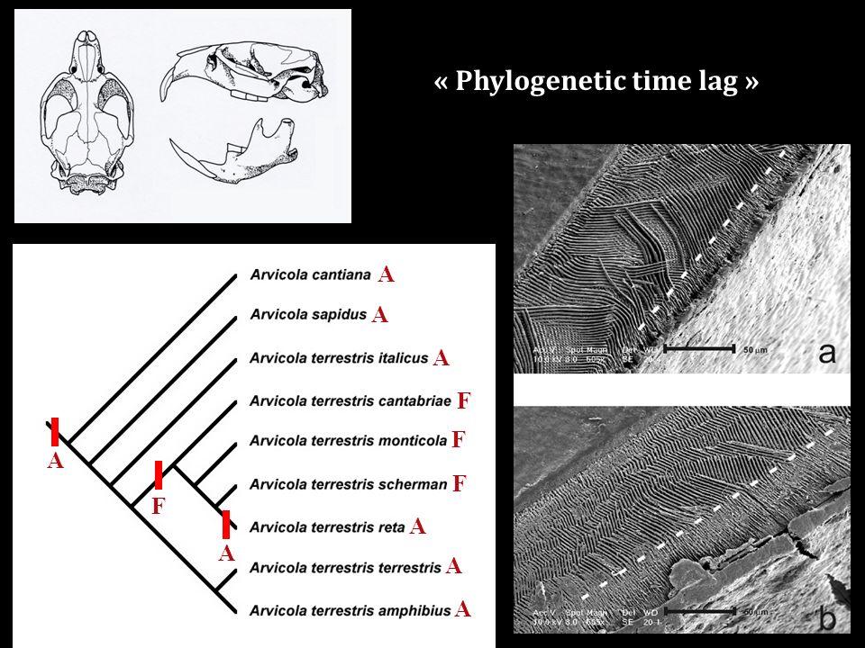 A A A A A A F F F A F A « Phylogenetic time lag »