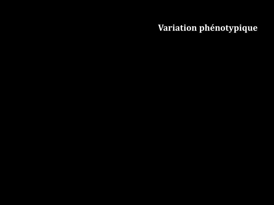 Variation phénotypique
