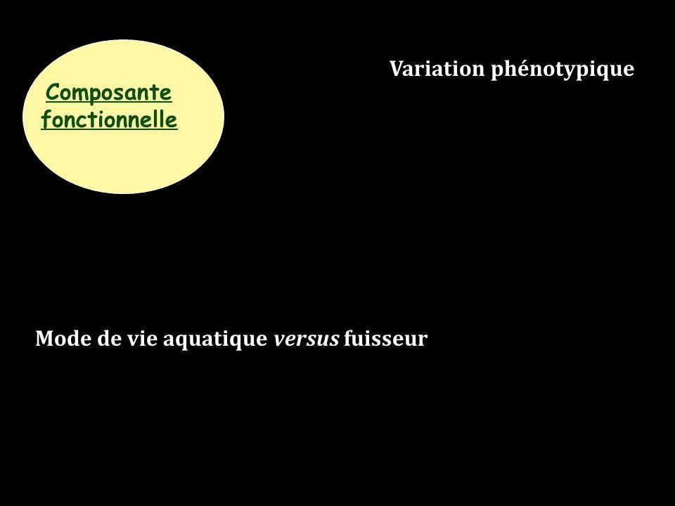 Composante fonctionnelle Mode de vie aquatique versus fuisseur Variation phénotypique