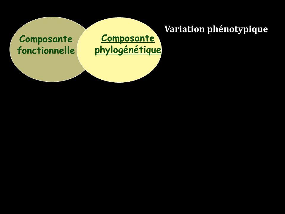Composante fonctionnelle Composante phylogénétique Variation phénotypique