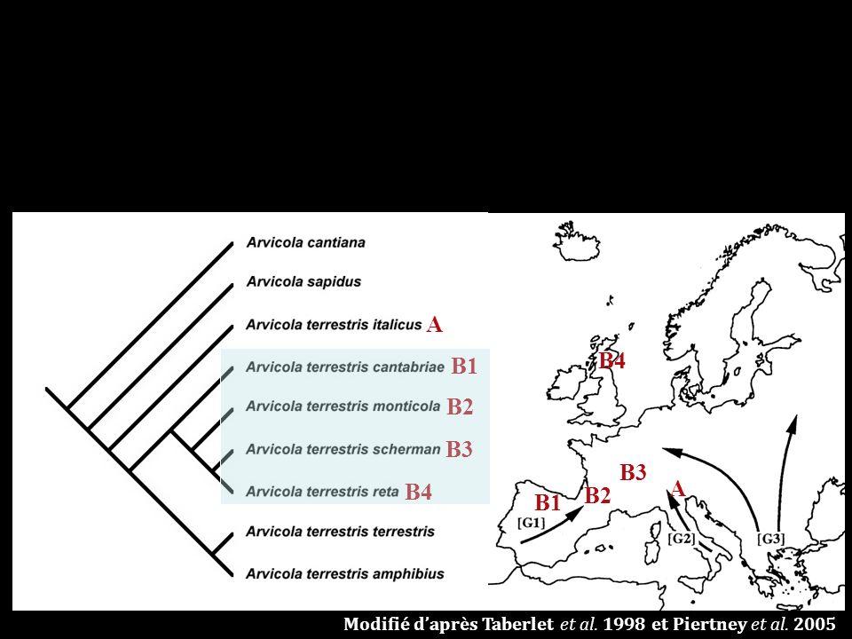A A B1 B2 B3 B4 C1 C2 Modifié daprès Taberlet et al. 1998 et Piertney et al. 2005
