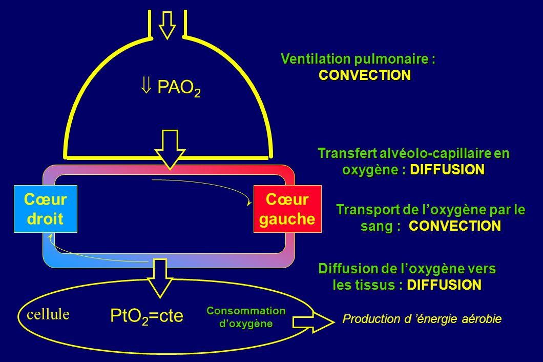 Consommationdoxygène PAO 2 PtO 2 =cte Ventilation pulmonaire : CONVECTION CONVECTION Transfert alvéolo-capillaire en oxygène : DIFFUSION Transport de