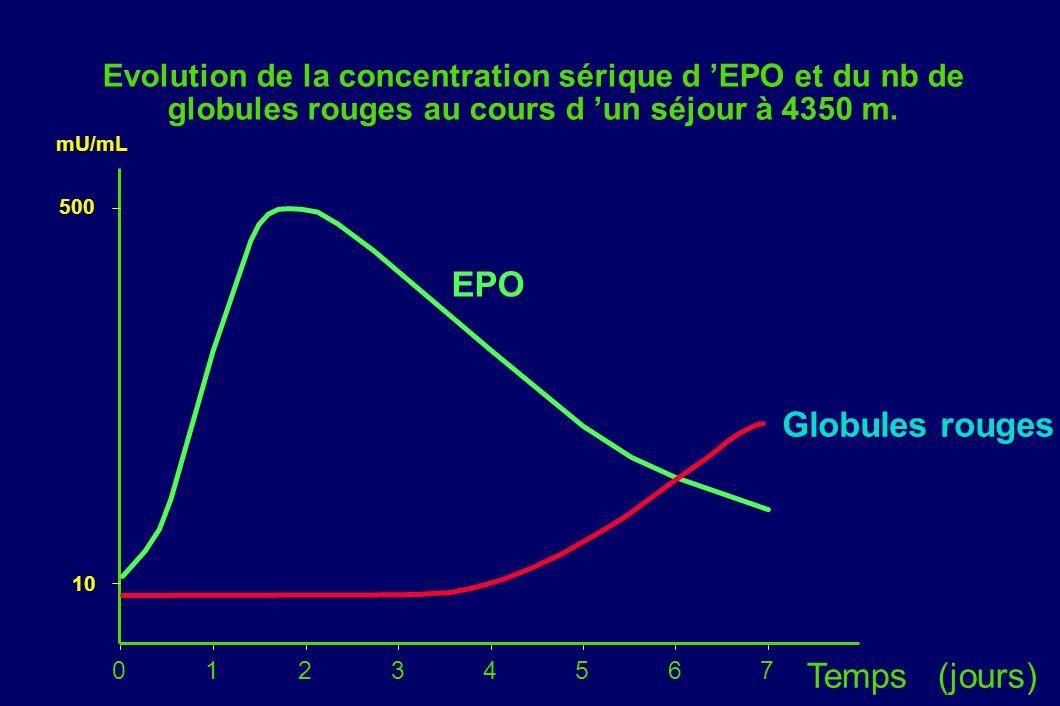 Evolution de la concentration sérique d EPO et du nb de globules rouges au cours d un séjour à 4350 m. 01234567 Globules rouges EPO Temps (jours) 10 5
