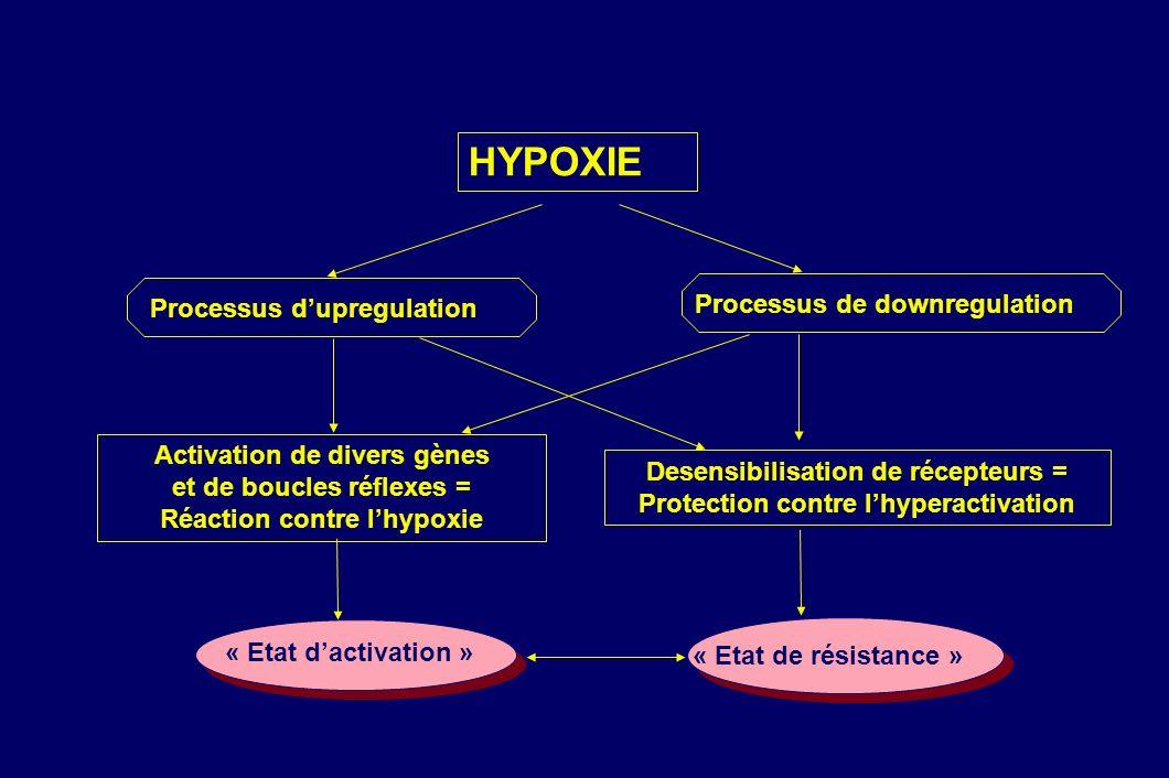 Activation de divers gènes et de boucles réflexes = Réaction contre lhypoxie Desensibilisation de récepteurs = Protection contre lhyperactivation HYPO