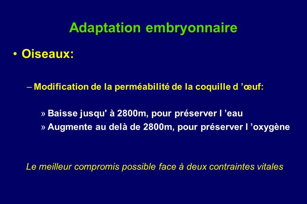 Adaptation embryonnaire Oiseaux: –Modification de la perméabilité de la coquille d œuf: »Baisse jusqu' à 2800m, pour préserver l eau »Augmente au delà
