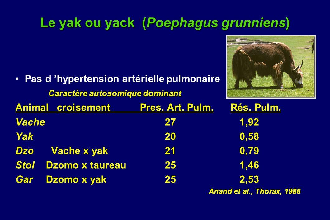 Le yak ou yack (Poephagus grunniens) Pas d hypertension artérielle pulmonaire Caractère autosomique dominant Animal croisement Pres. Art. Pulm. Rés. P