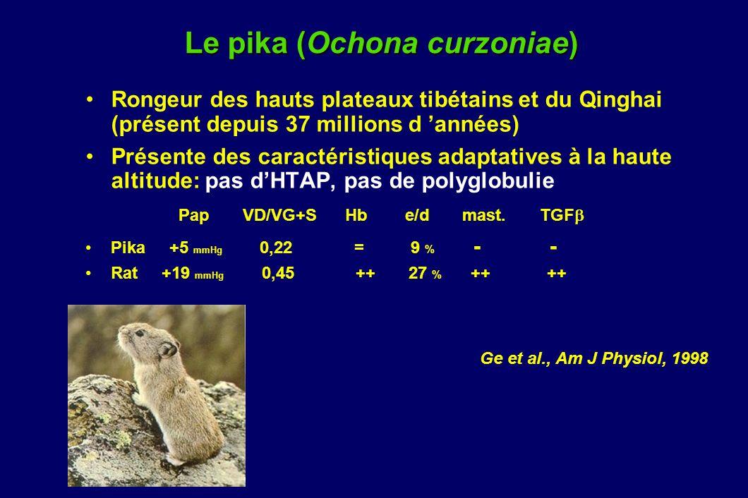 Le pika (Ochona curzoniae) Rongeur des hauts plateaux tibétains et du Qinghai (présent depuis 37 millions d années) Présente des caractéristiques adap