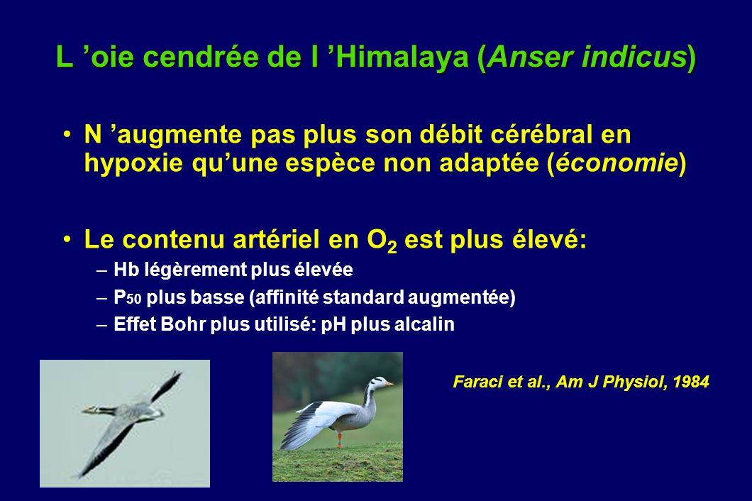 L oie cendrée de l Himalaya (Anser indicus) N augmente pas plus son débit cérébral en hypoxie quune espèce non adaptée (économie) Le contenu artériel