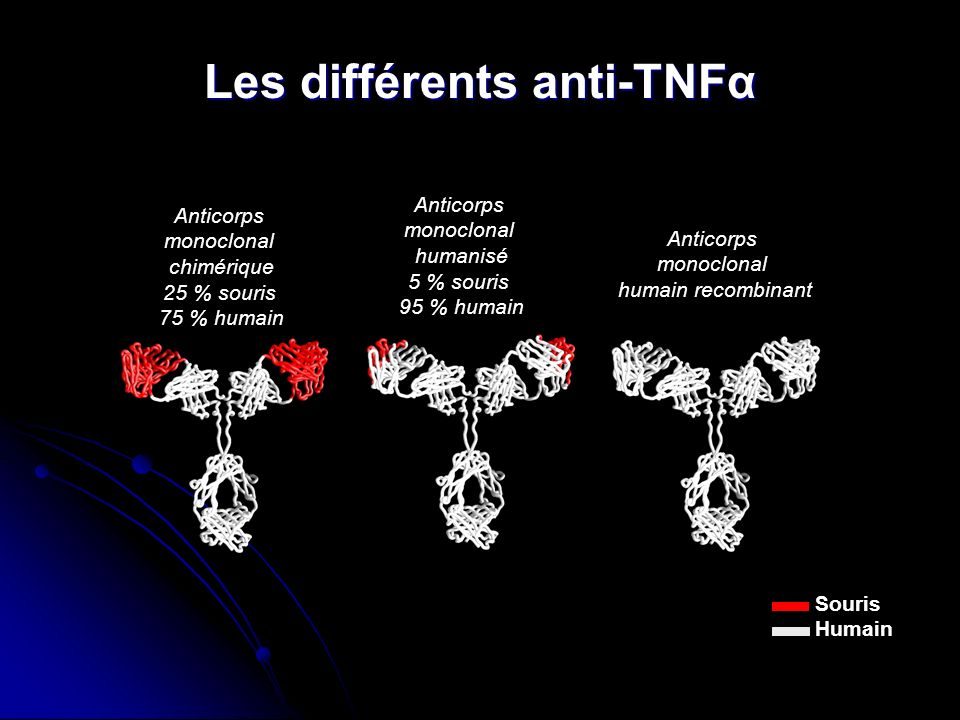 Les différents anti-TNFα Anticorps monoclonal chimérique 25 % souris 75 % humain Anticorps monoclonal humanisé 5 % souris 95 % humain Anticorps monoclonal humain recombinant Souris Humain