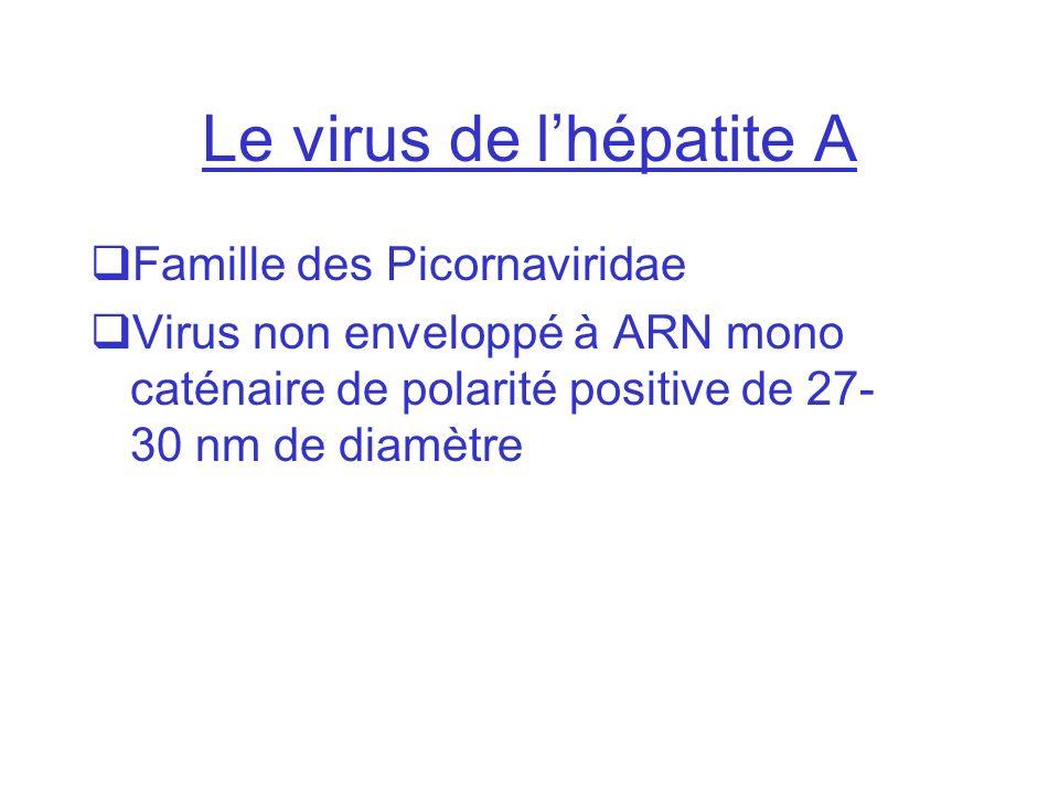 Le virus de lhépatite A Famille des Picornaviridae Virus non enveloppé à ARN mono caténaire de polarité positive de 27- 30 nm de diamètre
