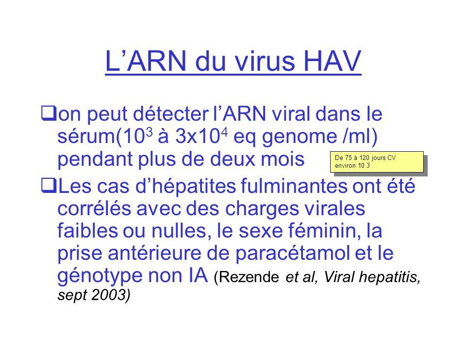 LARN du virus HAV on peut détecter lARN viral dans le sérum(10 3 à 3x10 4 eq genome /ml) pendant plus de deux mois Les cas dhépatites fulminantes ont