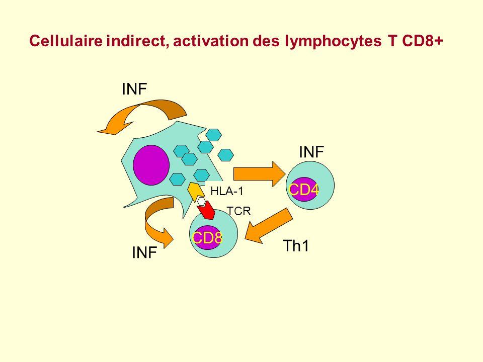 Sur les LT CD8+ lexpression du CD38 est augmentée par la présence de certains antigènes viraux, VIH, EBV, CMV glycoprotéine transmembranaire 45-kDa sur les T CD4+ et CD8+, les B les NK marqueur dactivation Le CD38 un marqueur dactivation cellulaire