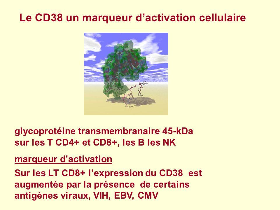 Sur les LT CD8+ lexpression du CD38 est augmentée par la présence de certains antigènes viraux, VIH, EBV, CMV glycoprotéine transmembranaire 45-kDa su