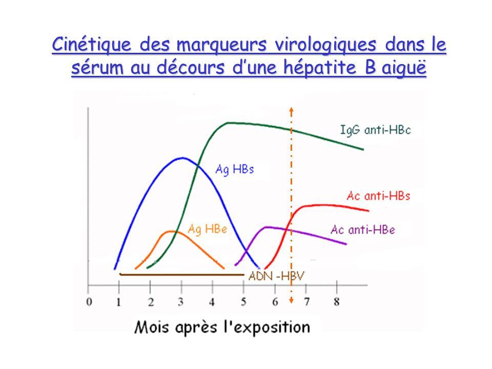 Cinétique des marqueurs virologiques dans le sérum au décours dune hépatite B aiguë