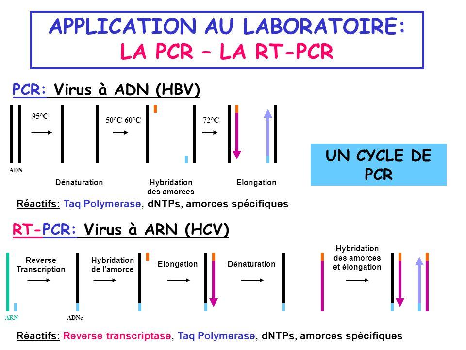 APPLICATION AU LABORATOIRE: LA PCR – LA RT-PCR PCR: Virus à ADN (HBV) Réactifs: Taq Polymerase, dNTPs, amorces spécifiques RT-PCR: Virus à ARN (HCV) 9