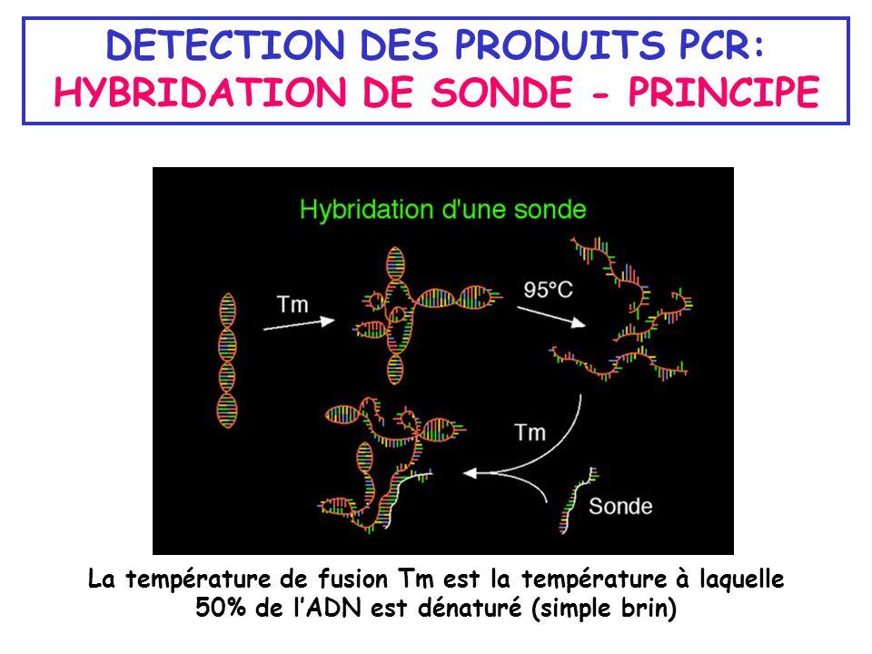DETECTION DES PRODUITS PCR: HYBRIDATION DE SONDE - PRINCIPE La température de fusion Tm est la température à laquelle 50% de lADN est dénaturé (simple