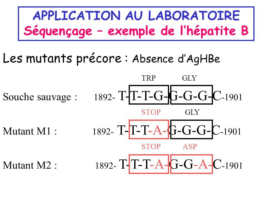 APPLICATION AU LABORATOIRE Séquençage – exemple de lhépatite B Les mutants précore : Absence dAgHBe TRP GLY Souche sauvage : 1892- T-T-T-G-G-G-G-C -19
