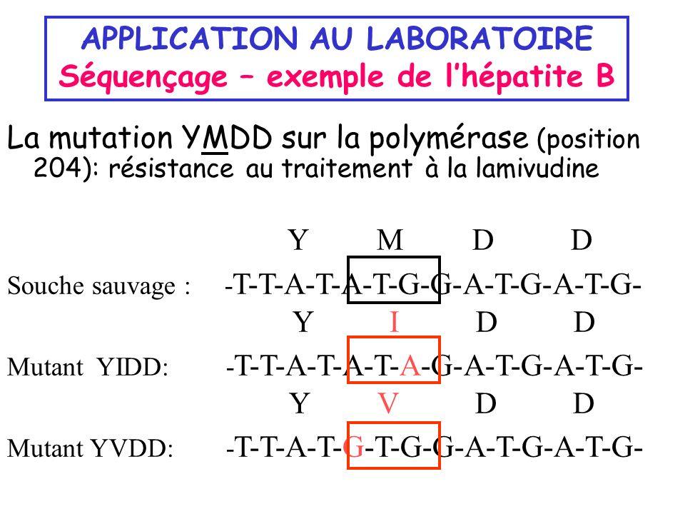 APPLICATION AU LABORATOIRE Séquençage – exemple de lhépatite B La mutation YMDD sur la polymérase (position 204): résistance au traitement à la lamivu
