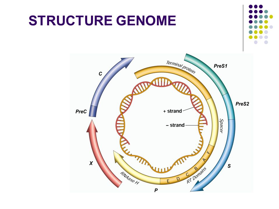 STRUCTURE GENOME