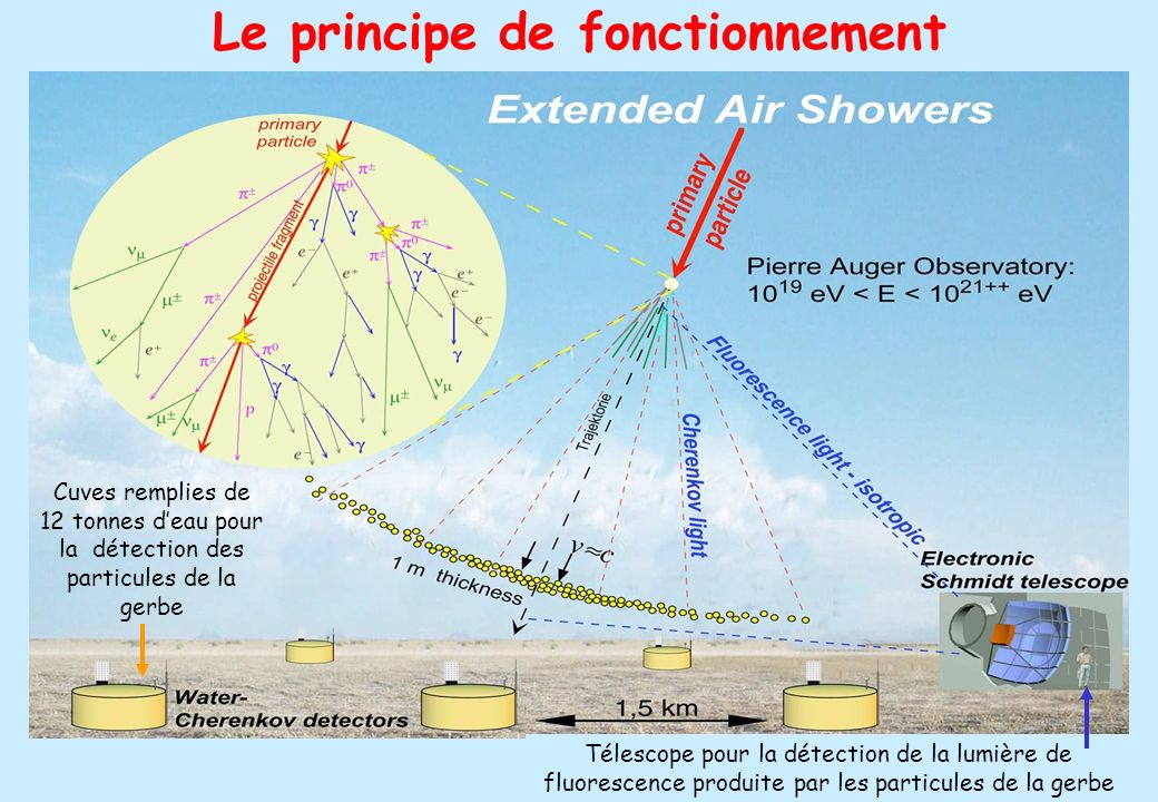 24 Le principe de fonctionnement Cuves remplies de 12 tonnes deau pour la détection des particules de la gerbe Télescope pour la détection de la lumiè
