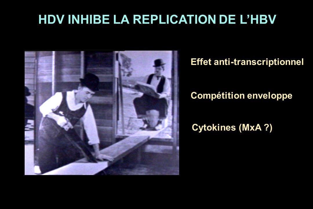 HDV INHIBE LA REPLICATION DE LHBV Effet anti-transcriptionnel Compétition enveloppe Cytokines (MxA ?)