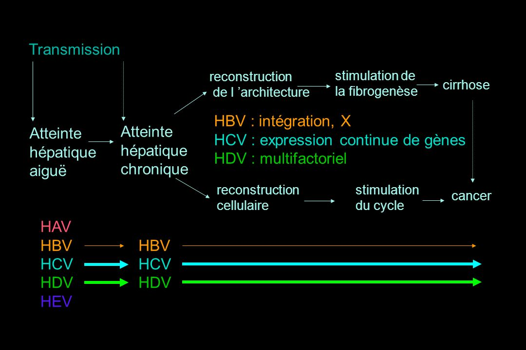 Atteinte hépatique chronique stimulation de la fibrogenèse stimulation du cycle cirrhose cancer HAV HBV HCV HDV HEV HBV HCV HDV reconstruction de l ar