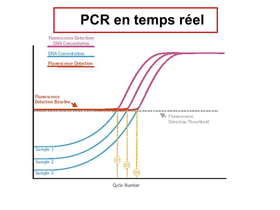 PCR en temps réel
