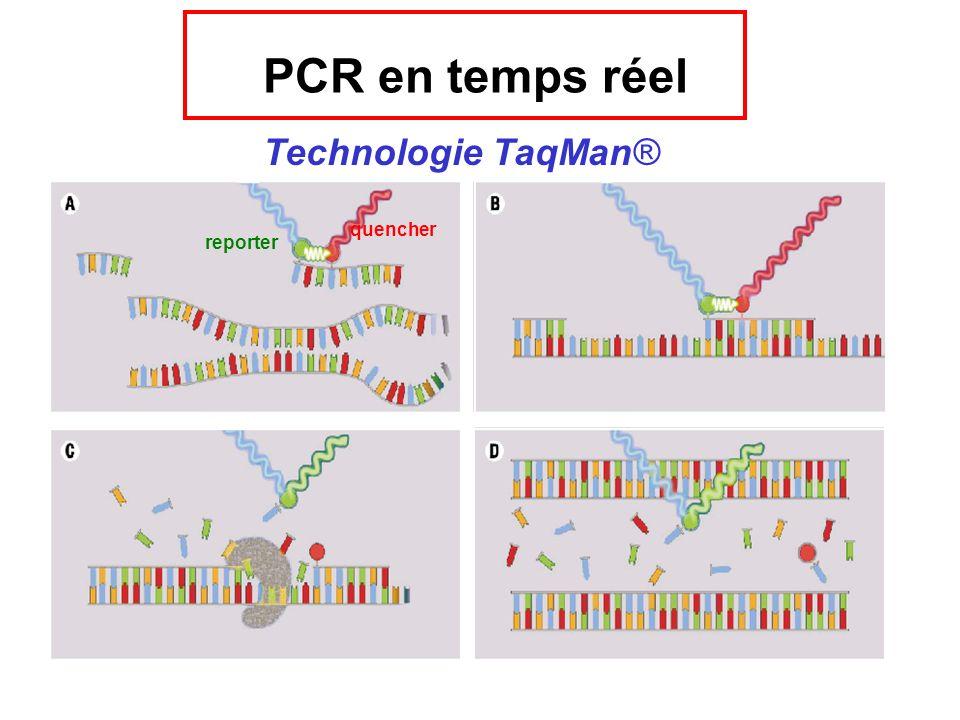 quencher reporter PCR en temps réel Technologie TaqMan®
