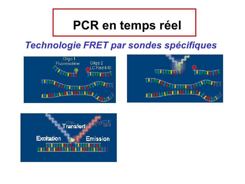 PCR en temps réel Technologie FRET par sondes spécifiques
