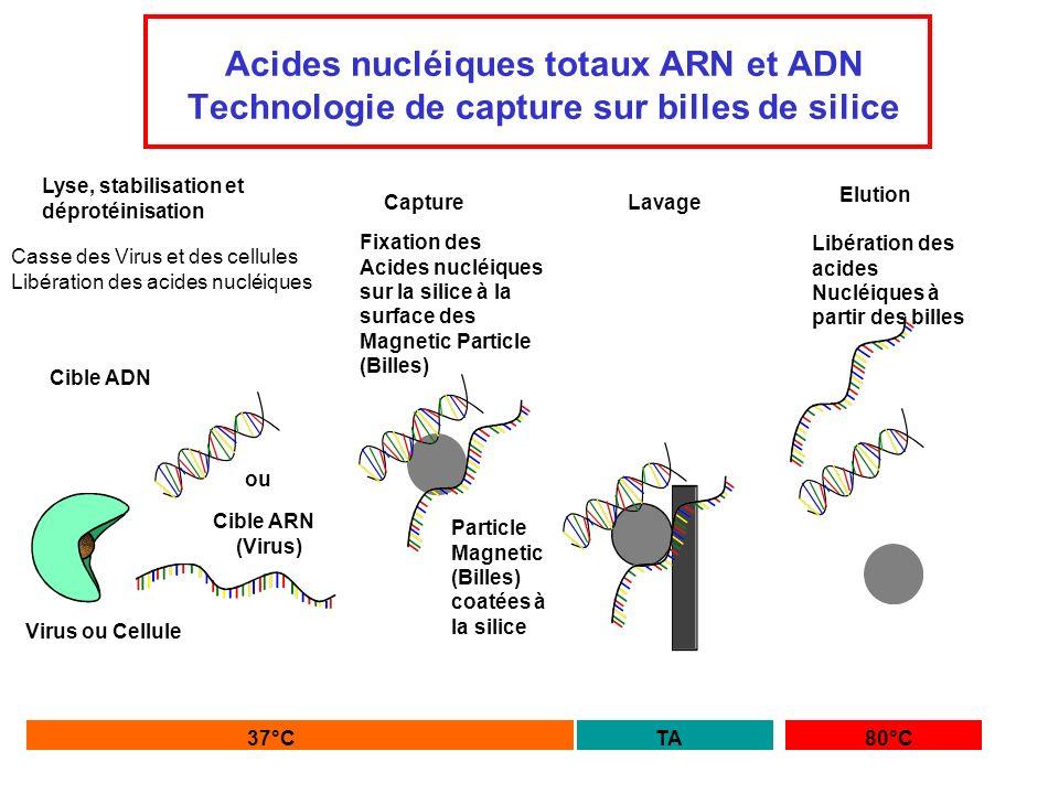 Acides nucléiques totaux ARN et ADN Technologie de capture sur billes de silice Lyse, stabilisation et déprotéinisation Capture Casse des Virus et des