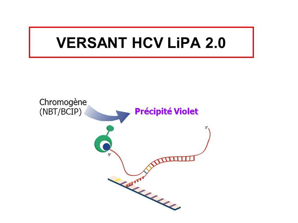 Chromogène (NBT/BCIP) Précipité Violet VERSANT HCV LiPA 2.0